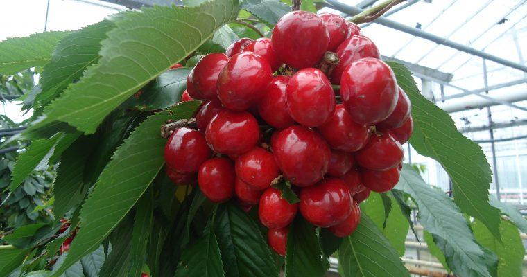 Diverse soorten vruchtenjam